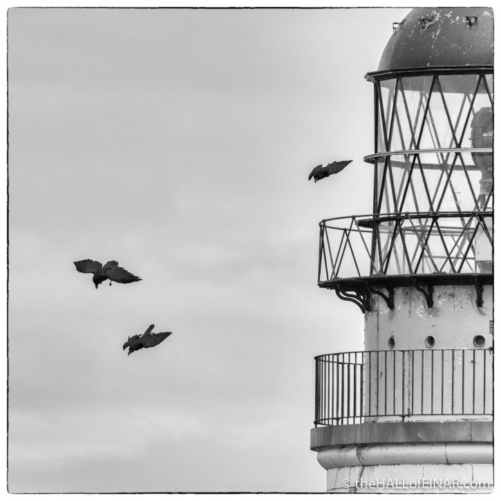 Ravens - Westray - The Hall of Einar - photograph (c) David Bailey (not the)