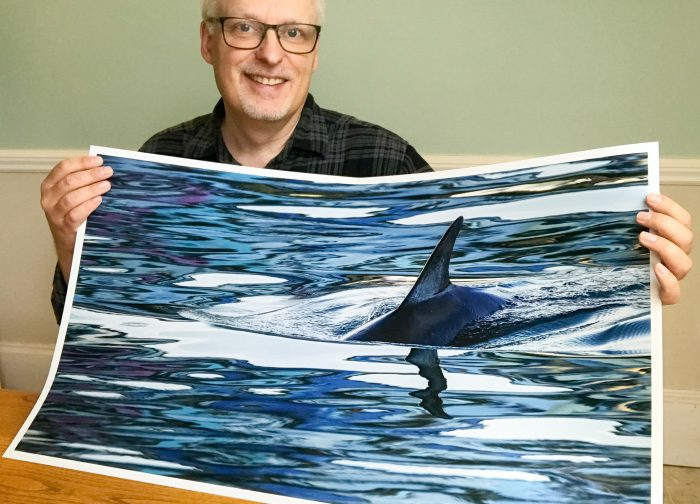 Dolphins in Brixham Harbour - The Hall of Einar - photograph (c) David Bailey (not the)