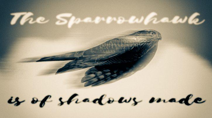 Sparrowhawk - The Hall of Einar - (c) David Bailey (not the)