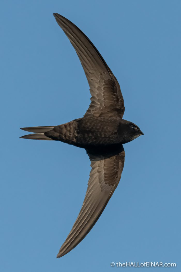 Swift - The Hall of Einar - photograph (c) David Bailey (not the)