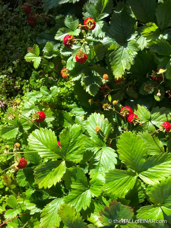 Wild Strawberries - The Hall of Einar - photograph (c) David Bailey (not the)