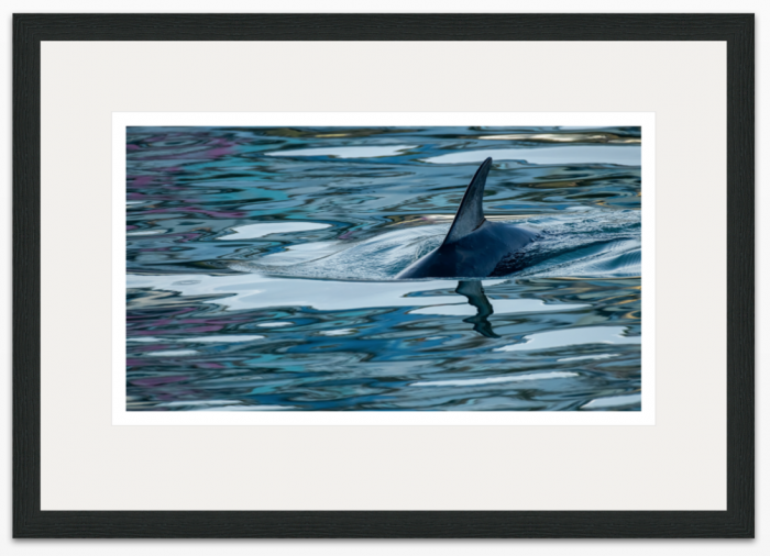 36 x 20cm Dolphin Reflections - The Hall of Einar
