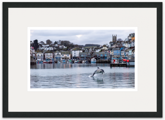 71 x 40 cm Christmas Dolphin Brixham Harbour - The Hall of Einar - photograph (c) David Bailey (not the)