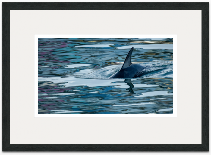 71 x 40cm Dolphin Reflections - The Hall of Einar