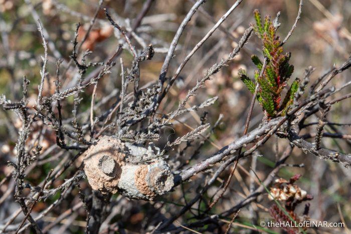 Heath Potter Wasps - Bovey Heath - The Hall of Einar - photograph (c) David Bailey (not the)