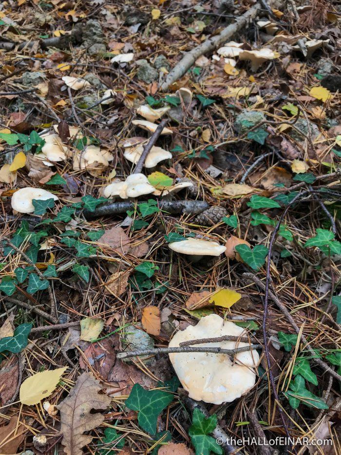 Hedgehog Fungus - The Hall of Einar - photograph (c) David Bailey (not the)