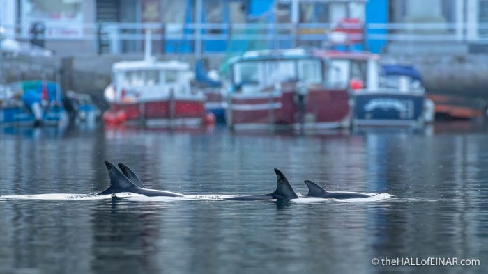 Christmas Dolphin Brixham Harbour - The Hall of Einar - photograph (c) David Bailey (not the)
