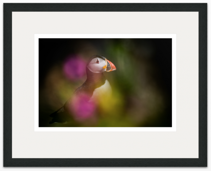 I Dream of Puffins 30 x 20cm - The Hall of Einar