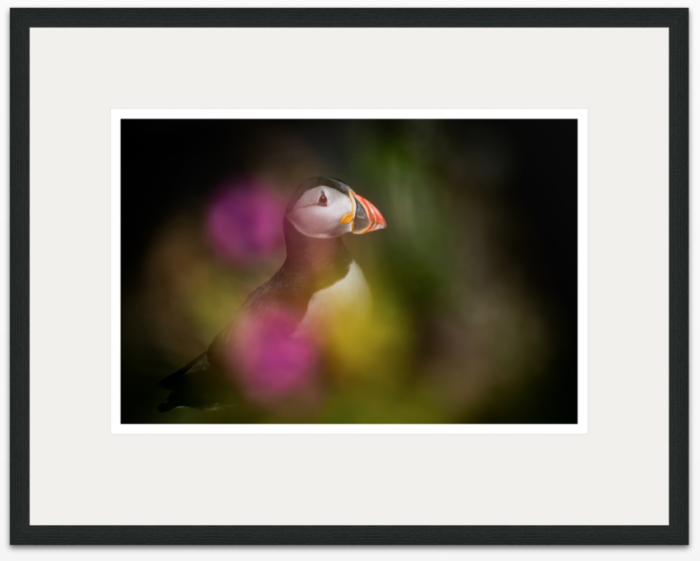 I Dream of Puffins 45 x 30cm - The Hall of Einar