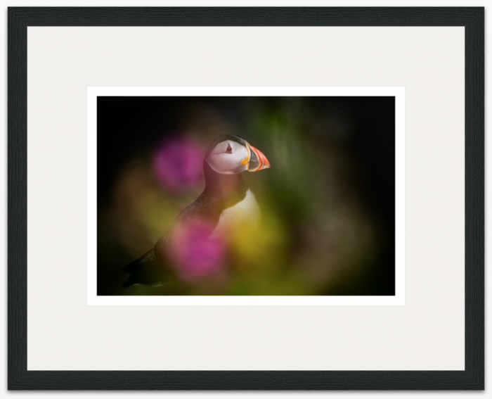 I Dream of Puffins 60 x 40cm - The Hall of Einar