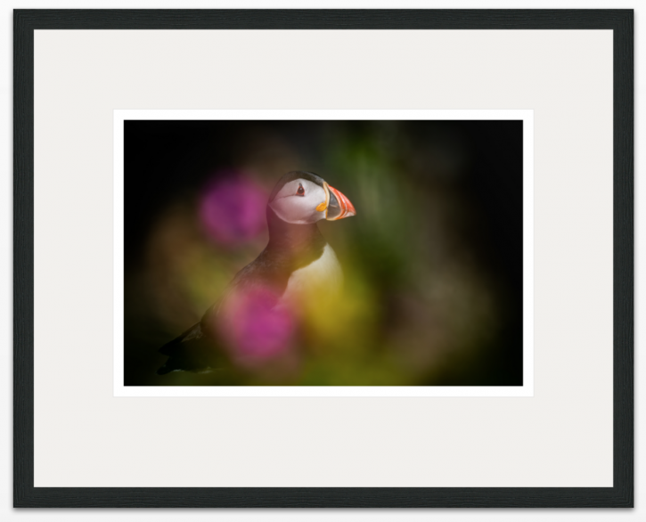 I Dream of Puffins 75 x 50cm - The Hall of Einar