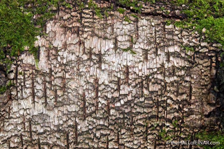 Birch bark - The Hall of Einar - photograph (c) David Bailey (not the)
