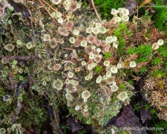 Lichen - The Hall of Einar - photograph (c) David Bailey (not the)