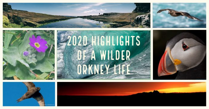 2020 highlights of a wilder Orkney life