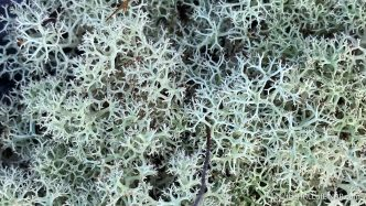 Lichen - The Hall of Einar - photograph (c) David Bailey (not the)