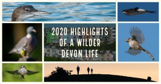 2020 highlights of a wilder Devon life