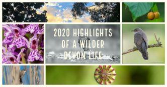 2020 highlights of a wilder Devon life