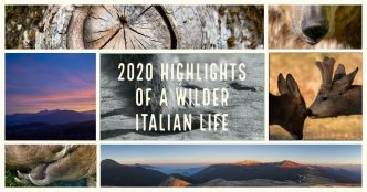 2020 highlights of a wilder Italian life