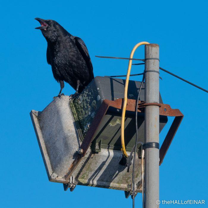 Crow - The Hall of Einar - photograph (c) David Bailey (not the)