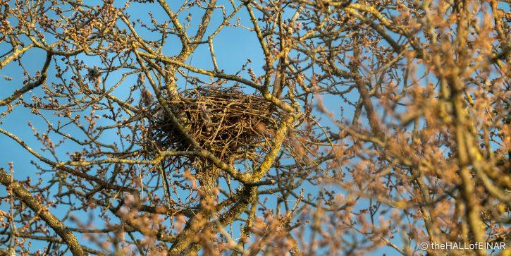 Buzzards' Nest - The Hall of Einar - photograph (c) David Bailey (not the)