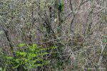 Green Woodpecker - The Hall of Einar - photograph (c) David Bailey (not the)