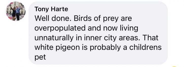 Sparrowhawk comments