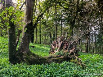 Fallen Tree - The Hall of Einar - photograph (c) David Bailey (not the)