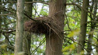 Buzzards Nest - The Hall of Einar - photograph (c) David Bailey (not the)