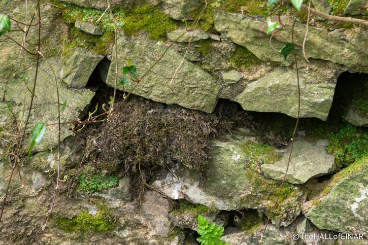 Dippers' Nest - The Hall of Einar - photograph (c) David Bailey (not the)