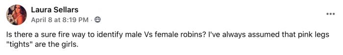 Male and female Robins
