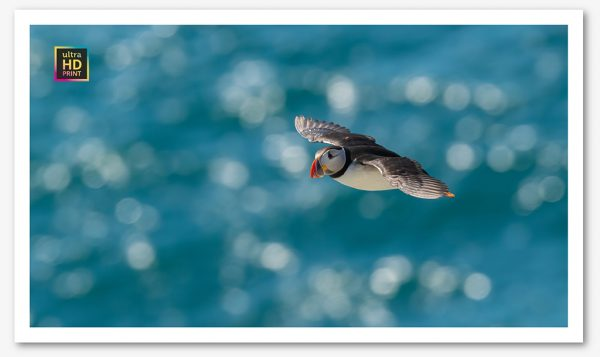 Sparkly Puffin