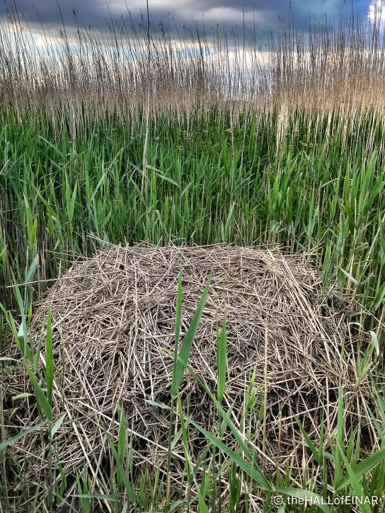 Swan's Nest - The Hall of Einar - photograph (c) David Bailey (not the)