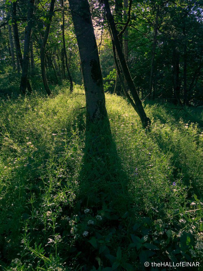 Goosegrass - The Hall of Einar - photograph (c) David Bailey (not the)
