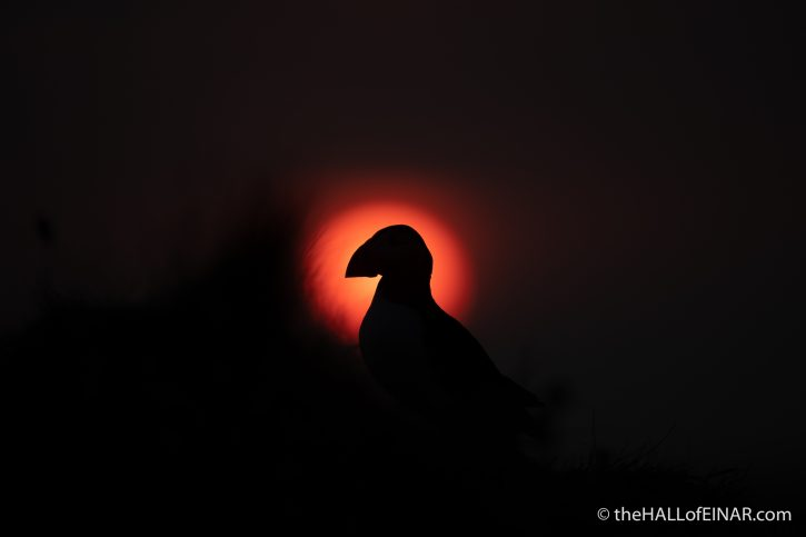 Puffin sunset - The Hall of Einar - photograph (c) David Bailey (not the)