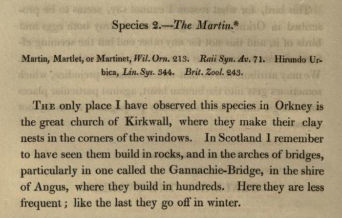Fauna Orcadensis - The Martin