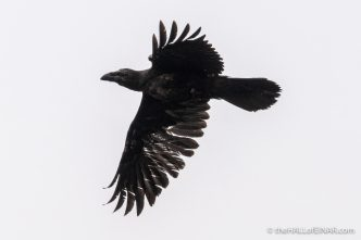 Raven - The Hall of Einar - photograph (c) David Bailey (not the)