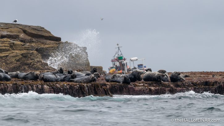 Seals and fishing boat - The Hall of Einar - photograph (c) David Bailey (not the)