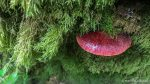 Beefsteak Fungus - Wistman's Wood - The Hall of Einar - photograph (c) David Bailey (not the)