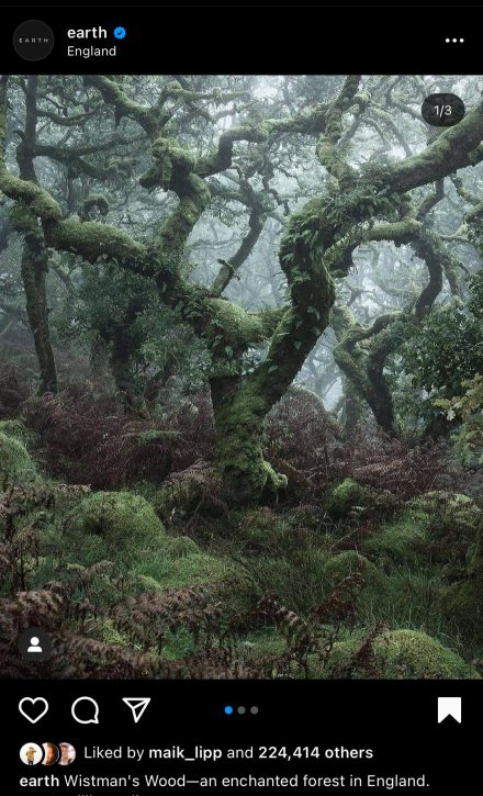 Wistman's Wood - The Hall of Einar - original photograph by neiljburnell
